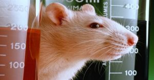 Rat Study Destroys Corporate GMO Propaganda